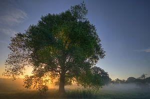Landschap - Mist van