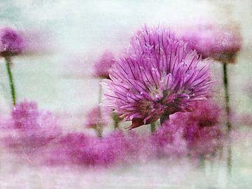 Bieslook ( Allium schoenoprasum ) in pastel van Claudia Gründler