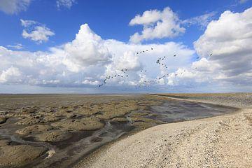 Gänse über dem trockenen Wattenmeer von Anja Brouwer Fotografie