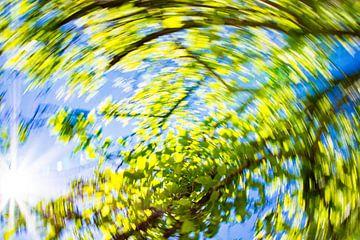 daytrails - groen - boom - zon - abstracte - hedendaagse kunst von Sven Van Santvliet
