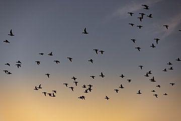 Vögel fliegen während des Sonnenaufgangs von Percy's fotografie