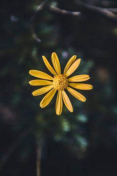 Gelbe Blume von Abby's Voyage