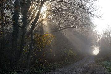 Zonnestralen schijnen door de bomen op een smalle landweg aan de rand van het bos op een wazige ocht van Maren Winter