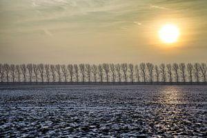 Zonnig winterlandschap
