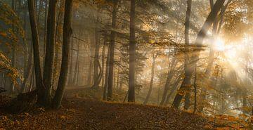 Forêt Lumière, Norbert Maier sur 1x