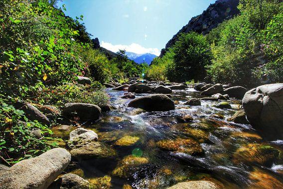 The stream van Maurice Hoogeboom