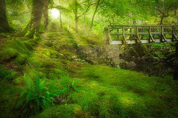Het groene weelderige bos van het Coed y Brenin Forest Park in Snowdonia National Park in Wales, Eng van Bas Meelker