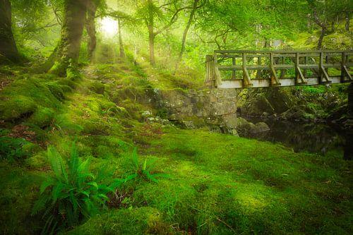 Het groene weelderige bos van het Coed y Brenin Forest Park in Snowdonia National Park in Wales, Eng