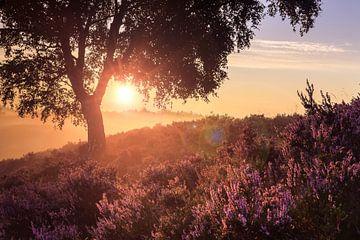Zonsondergang in paars heide landschap van Fotografiecor .nl