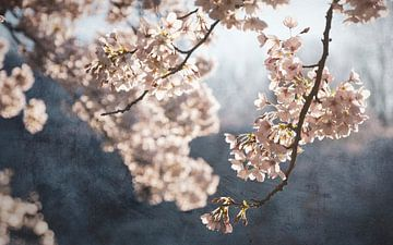 Pittoresque floraison printanière sur Rob Visser