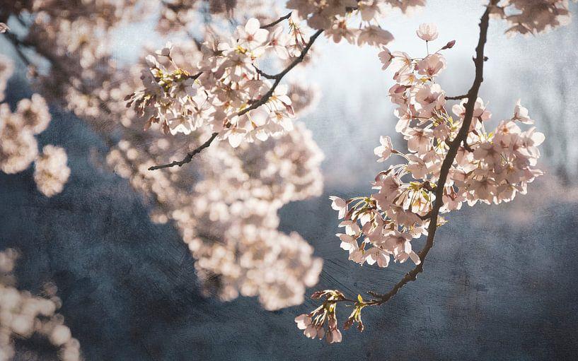 Schilderachtige lente bloesem van Rob Visser