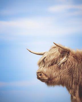 Schottischer Highlander von Nicky Kapel