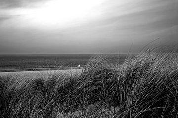 Gras in den Dünen am Meer