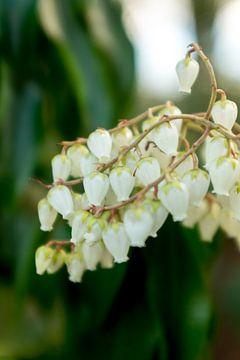 Botanische weiße Blumen Kunst | Fine Art Blumenfotografie von Karijn | Fine art Natuur en Reis Fotografie