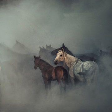 Die verlorenen Pferde, Huseyin Taşkın von 1x