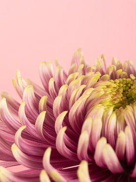rosa Blume von simone swart