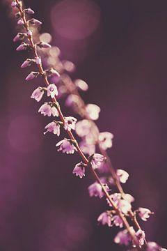 Heidetakjes met paarse bokeh achtergrond van Roosmarijn Bruijns