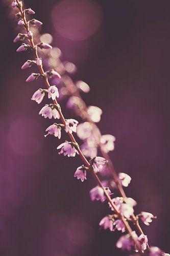Heidetakjes met paarse bokeh achtergrond