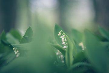 bloemen part 128 van Tania Perneel