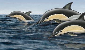 Gewone dolfijn, Delphinus delphis delphis van Urft Valley Art