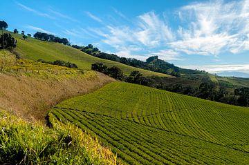 Costa Rica: Natuurgebied Pacayas von Maarten Verhees