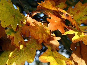 Herfstbladeren. Autumn leaves. van Joke Schippers