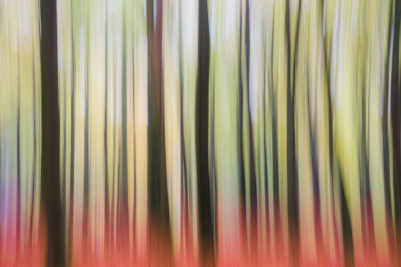 Forest Trip van Coen Weesjes