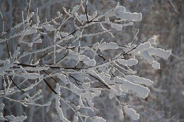 Leafs of snow van Ruby Nussy