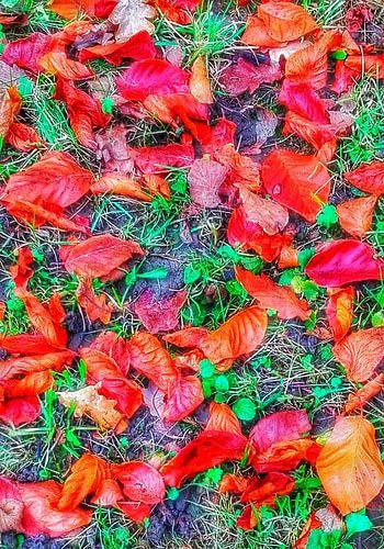 Gloire d'automne sur mimulux patricia no