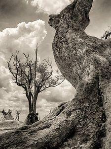 Toter Baum in Botswana von Ed Dorrestein