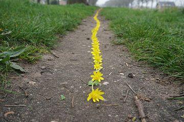 Gelbe Linie von Mies Heerma
