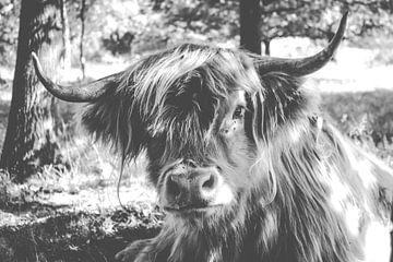 Schotse hooglander, black & white van Laura Reedijk