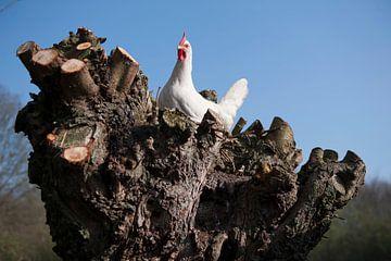 Chicken von Roland de Zeeuw fotografie