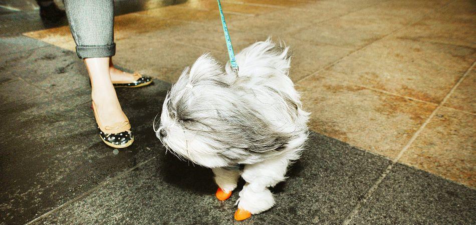 doggyin the wind