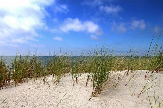 Junge Dünen von Ostsee Bilder