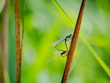 Libellen von Anouk van der Schot