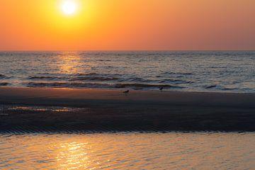 coucher de soleil sur Tania Perneel