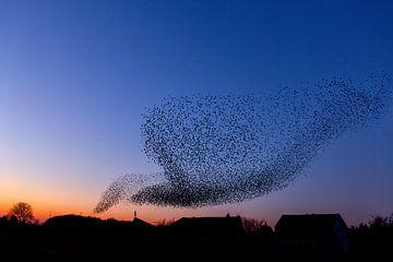 Der Starling-Tanz von Wilma  Wijers Smeets
