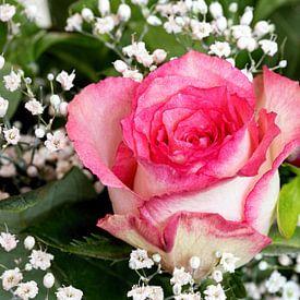 Roze roos van W J Kok