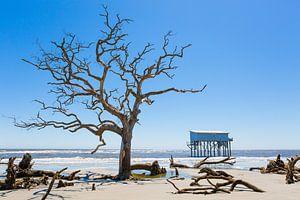 Dode bomen op het strand. van