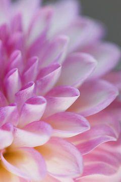 découpe de fleur sur Augenblicke im Bild