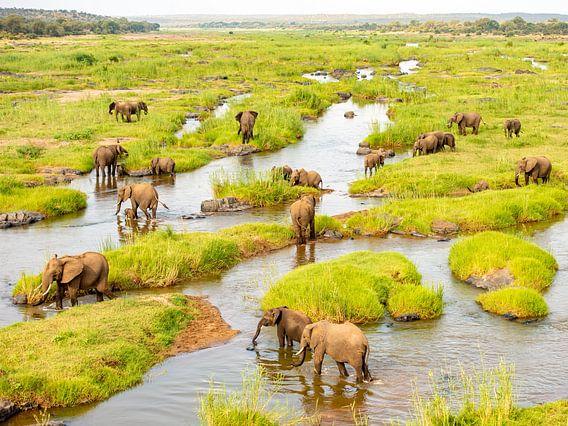 Grote olifantekudde in het landschap