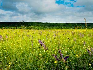 Veld met wilde bloemen in Frankrijk van Gabi Gaasenbeek