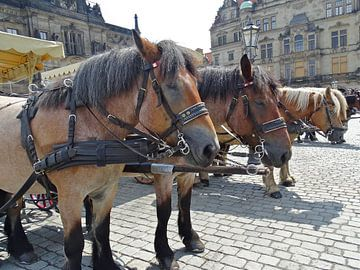 Wachtende paarden in Dresden van Tineke Laverman