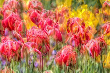 Tulpen, abstract van Torsten Krüger