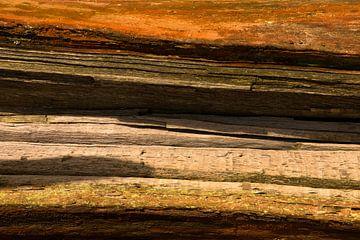 Couches colorées sur un arbre tombé sur Coos Photography