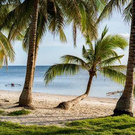 Palmen und Meer mit Bangka Boot zum Sonnenuntergang auf der Insel Siquijor auf Philippinen von Daniel Pahmeier
