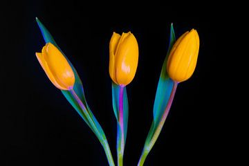 Hollandse gele tulpen sur Celina Dorrestein