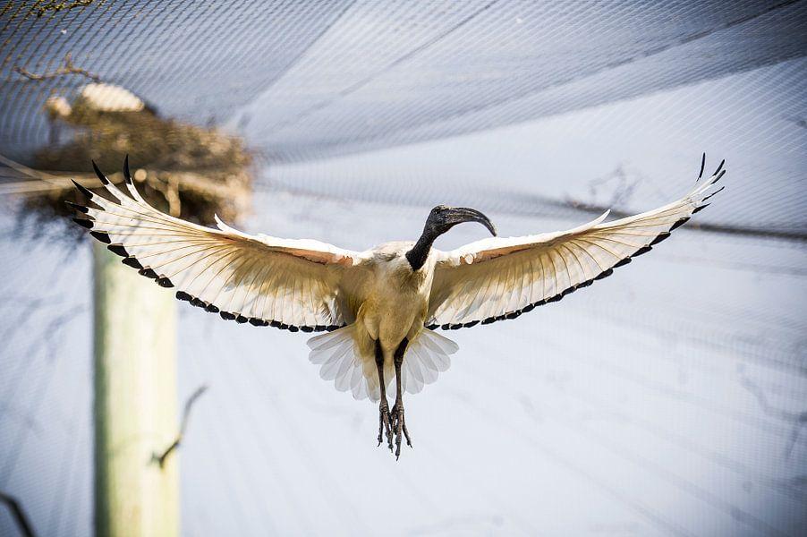 Vogel in vlucht van Photography by Karim