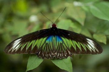 Vlinder von Jelle  Beuzekom
